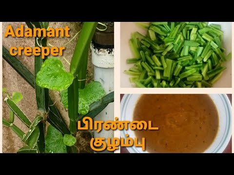 பிரண்டை குழம்பு/Adamant creeper/Calcium rich/Helps to strengthen the bones - YouTube
