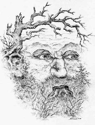 oldman-tree.jpg